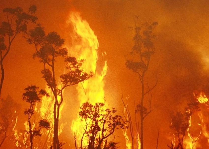 Australian businesses impacted by bushfires