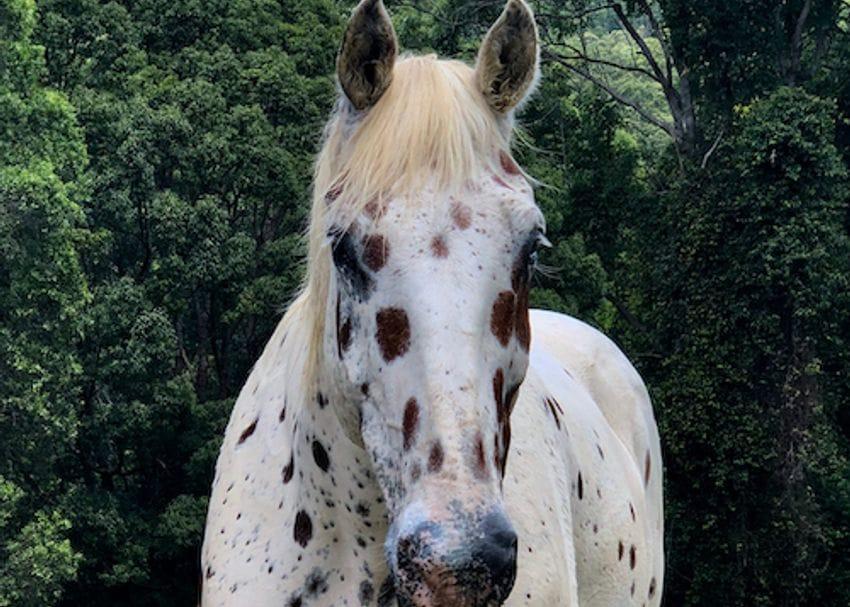 Creso develops hemp product for horses