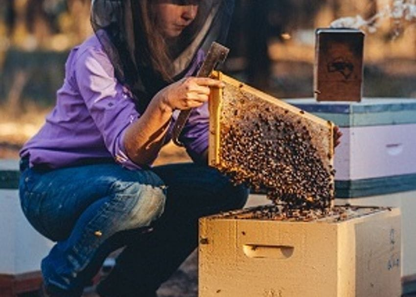 Bega Cheese launches AI innovation to protect bees