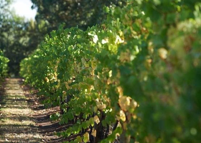 Treasury Wine Estates refuses to be crushed by Chinese reports