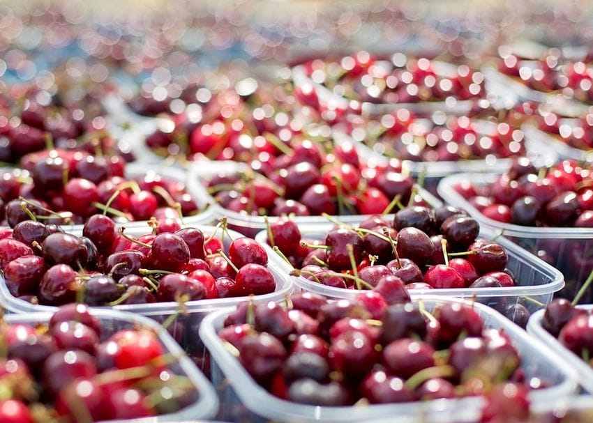 """Business as usual"" for Aussie cherry exports to China despite trade tension whispers"