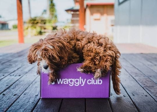 Mad Paws throws a $3m bone to Waggly Club