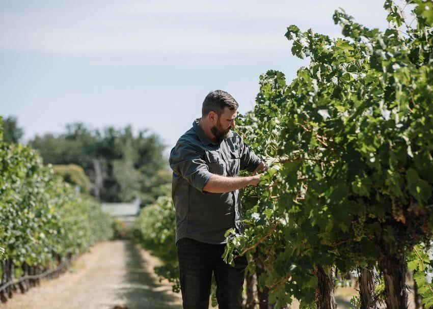 Aussie winemakers uncork new markets as Chinese tariffs force fresh pivot