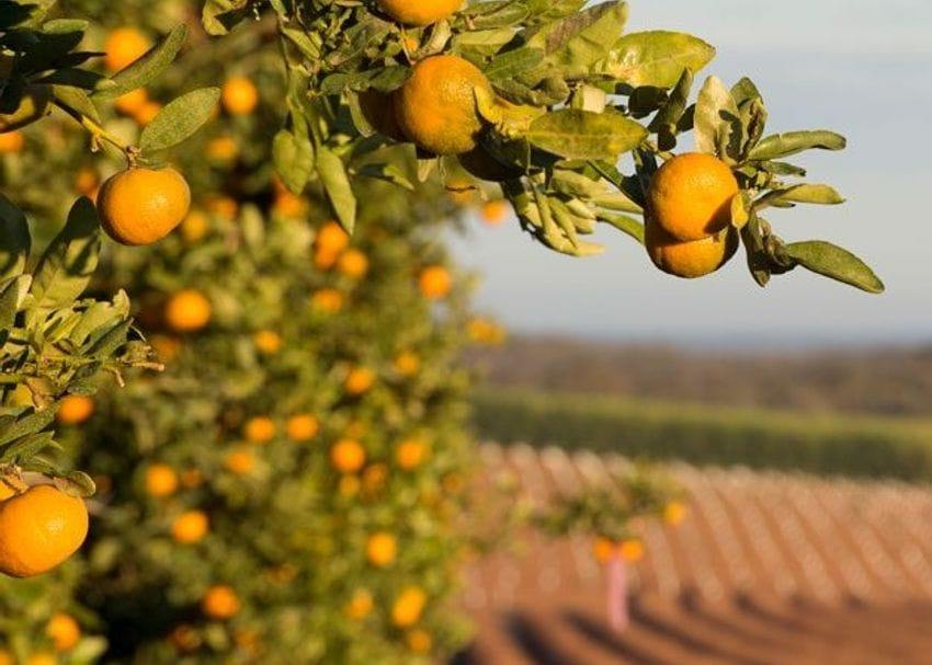 Costa Group to buy QLD citrus grower for $200m
