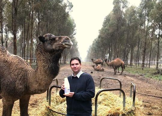 WA camel farm tastes success amidst global uptick for niche milk