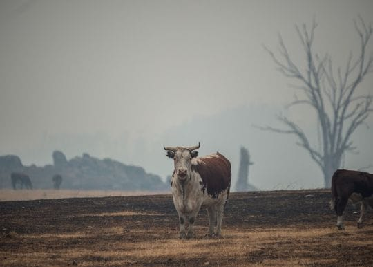 Unless we act now, a hotter, drier and more dangerous future awaits Australia, IPCC warns