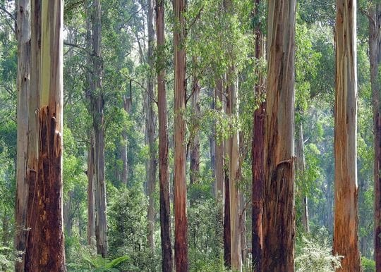 Corporate Australia taps into social conscience with a sharp rise in ESG reporting