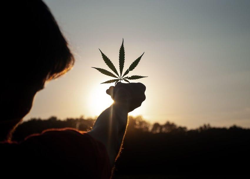 Creso Pharma rides cannabis stock momentum