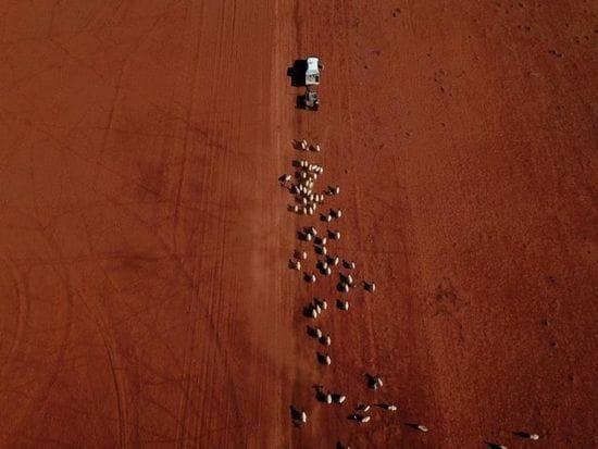 Drought-proof cash for farm business plans