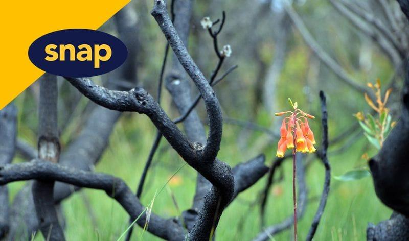 SNAP Bushfire Fundraiser