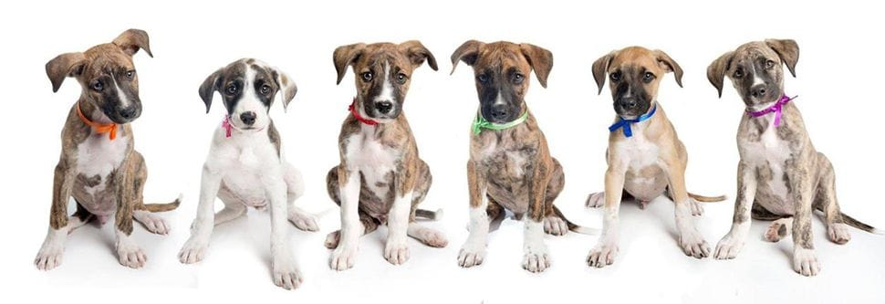 L litter angel paws rescue dogs