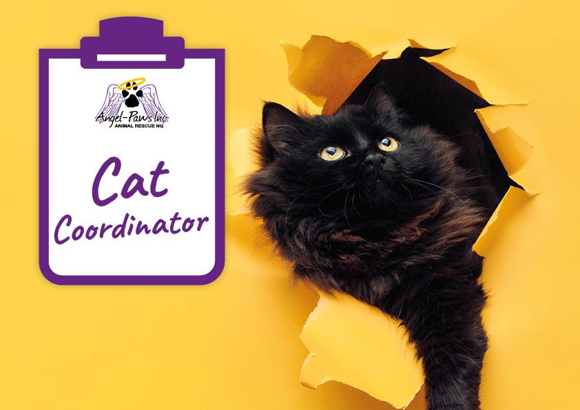 Cat Coordinator