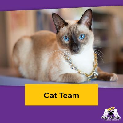 Cat Team Members