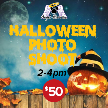 Book Halloween Pet Photo Booth