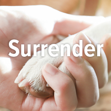 Surrender an Animal to Angel Paws