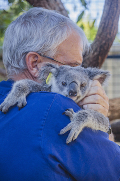 Maryanne prior to he relsease to the wild © WWF-Australia