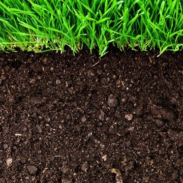 Under Turf Soil