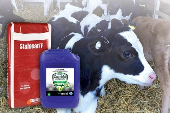 Calf Shed Hygiene - Keeping it clean