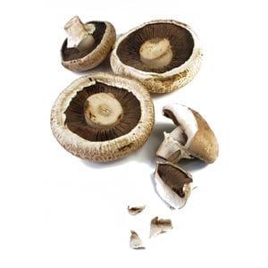 Mushroom - Field