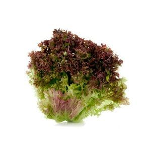 Lettuce - Coral Red