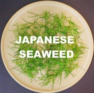 Japanese Land Seaweed