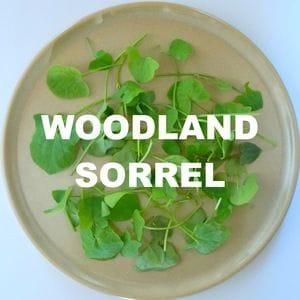Woodland Sorrel