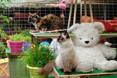 Ashbridge Boarding Cattery offers accommodation from only $15 per day