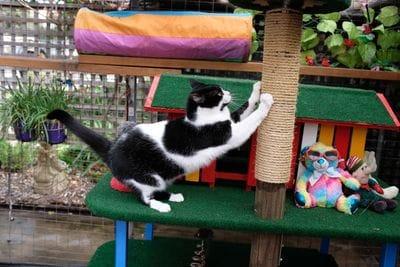 Cats love keeping their claws trim and sharp at Ashridge