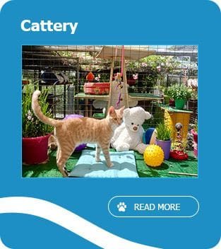 Cattery Perth, Cat boarding fremantle, Pet boarding Banjup - Armadale