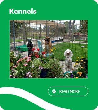 Dog Kennels Fremantle, Kennels Jandakot, Pet Boarding Banjup - Perth
