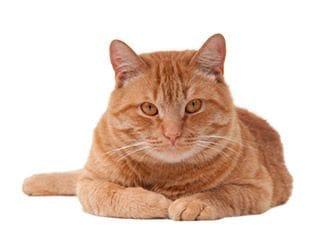 Premium cat care in our Banjup location. Close to Jandakot, Cockburn, Leeming and Canningvale.