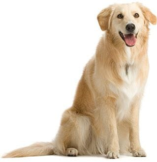 We care for large dogs, young dogs, older dogs or dogs with health issues. Nothing is too much trouble.