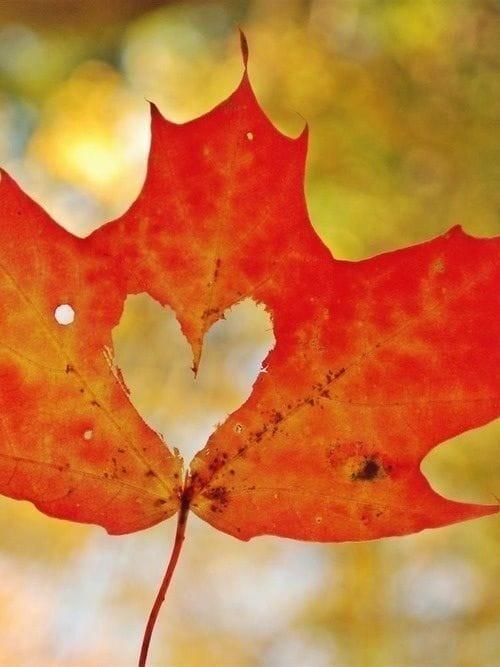 Flip for Fall