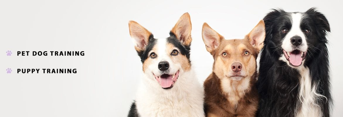 Pet Dog and Puppy Training