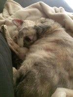 Kimba and Fatty Liver Syndrome