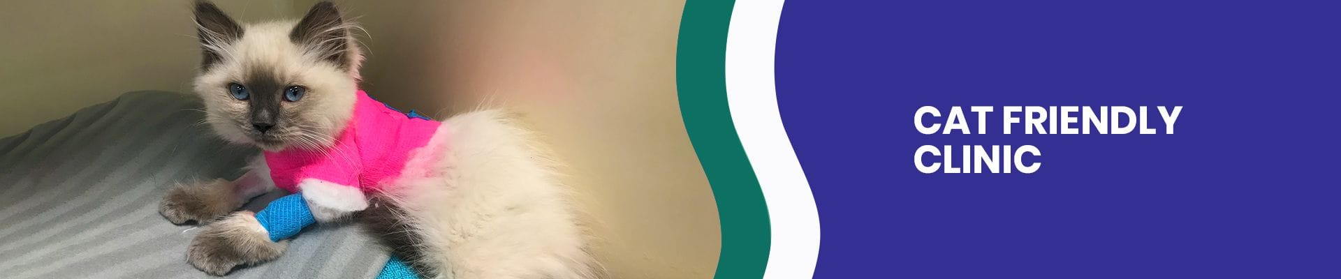 Cat Friendly Clinic in Underwood | Cat Vet Brisbane