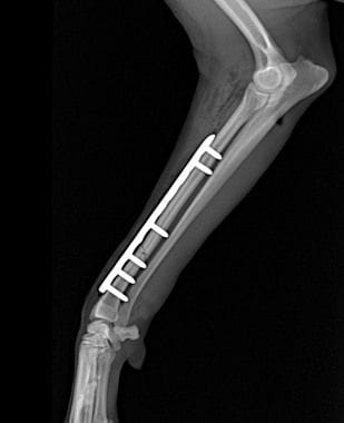 Fracture fixation | Veterinary Specialist Services