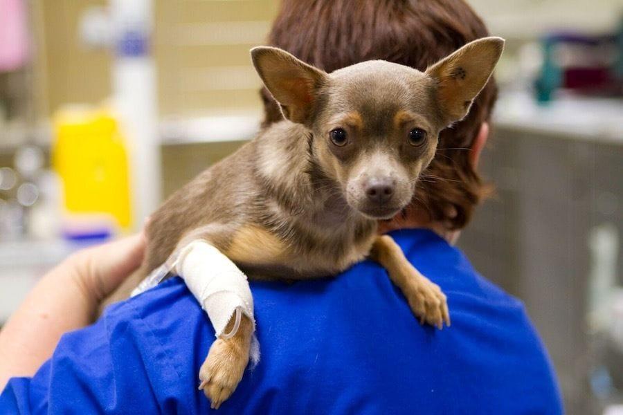 Veterinary Nursing | Brisbane & Gold Coast Vets