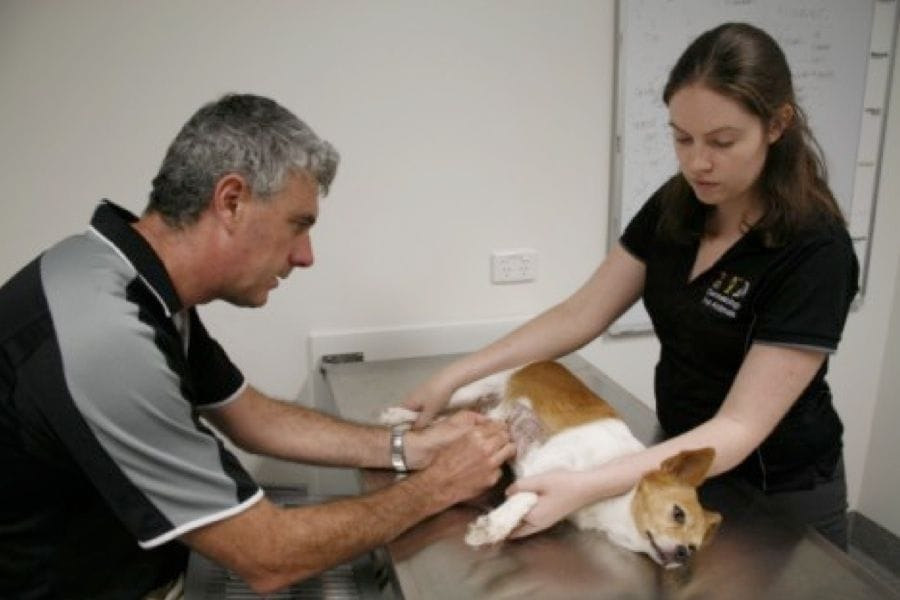 Animal Dermatology | Brisbane & Gold Coast Vets