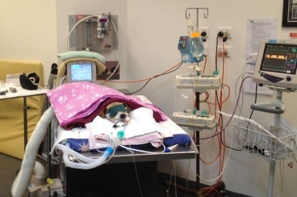 Animal Intensive Care | Brisbane & Gold Coast Vets