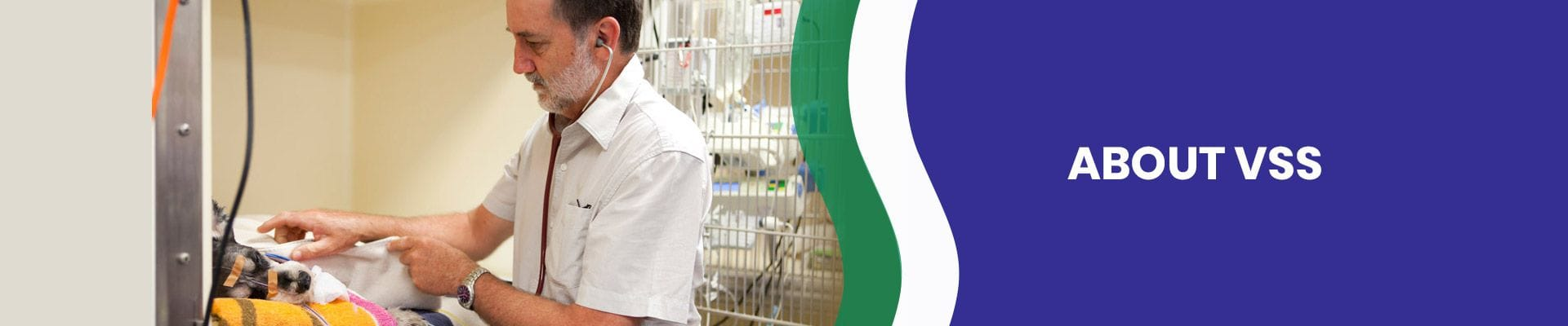 About Veterinary Specialist Services | Brisbane & Gold Coast Vets