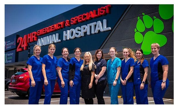 Meet the veterinary team at VSS in Brisbane and the Gold Coast