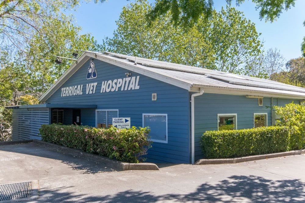 Terrigal Vet are a proud Central Coast business since the mid-1970s growing from one vet to today's Terrigal Drive practice