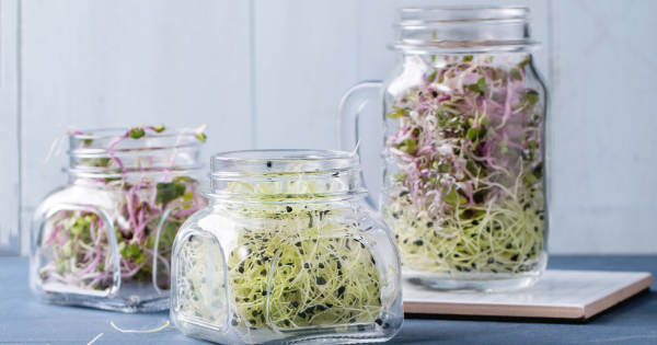Brassica vegetables and broccoli sprouts and their benefit for cancer management
