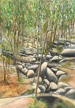 Rocks in the rainforest valley, Noosa Camino