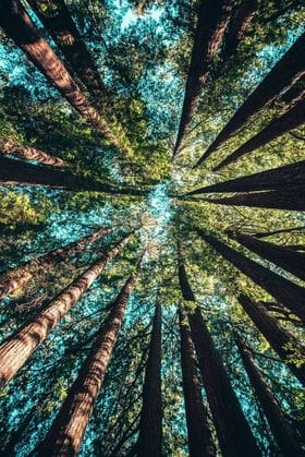 Sustainable Forestry the Facts