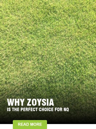 Zoysia ZT-11