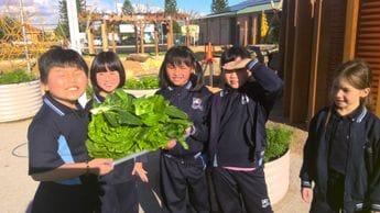 Sustainability Garden Harvest