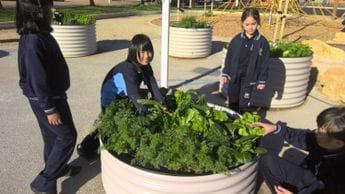 Sustainability Garden Harvest Photo Two