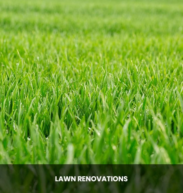 Lawn Renovations Curlewis, Drysdale | Taylor's Lawn Care Geelong & Bellarine Peninsula